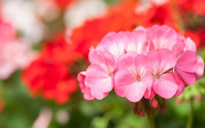 Pre-Orders Continue, Plant Sale Cancelled