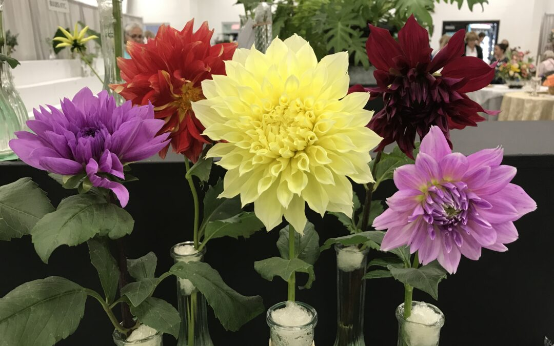 Volunteer to be a DCF Flower Show Clerk